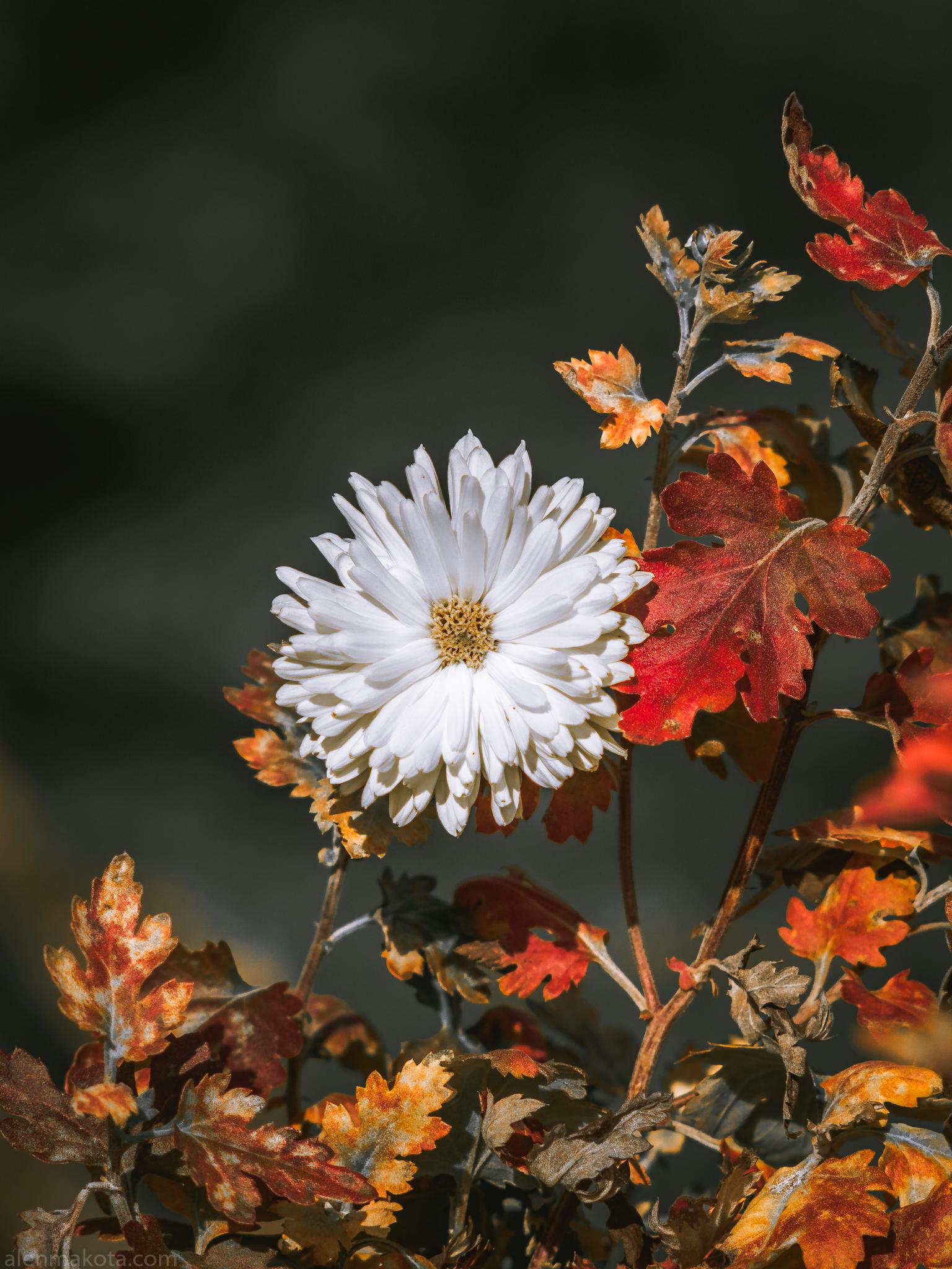 Last white Flower