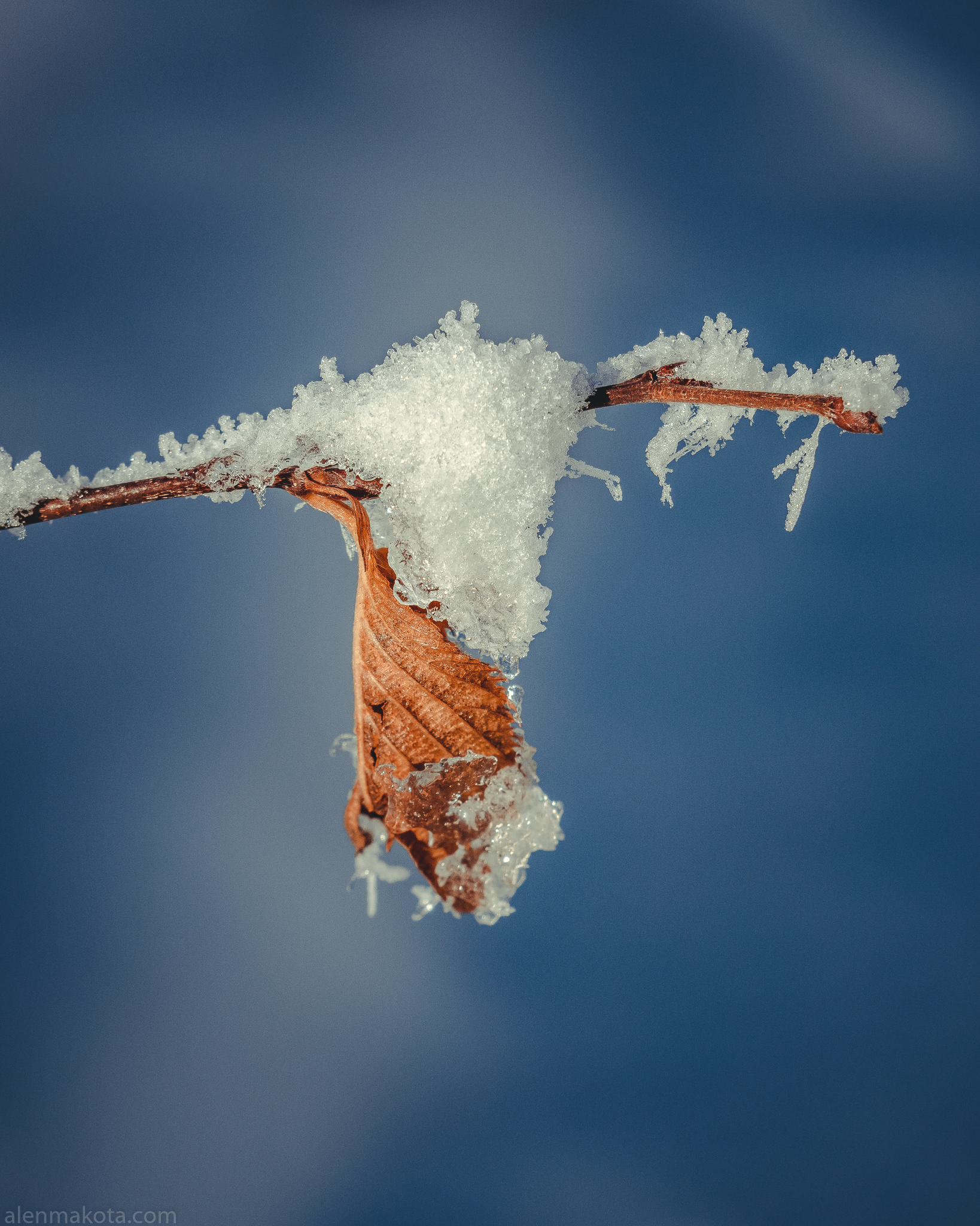 Snow on Dead Leaf